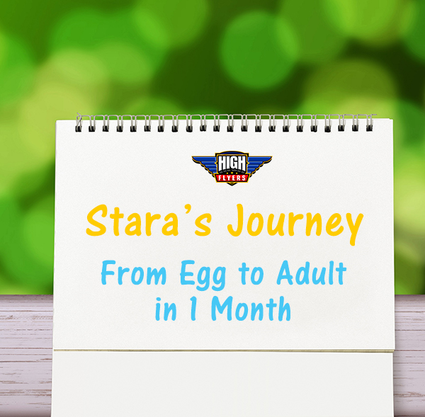 Stara's Journey from Egg to Adult