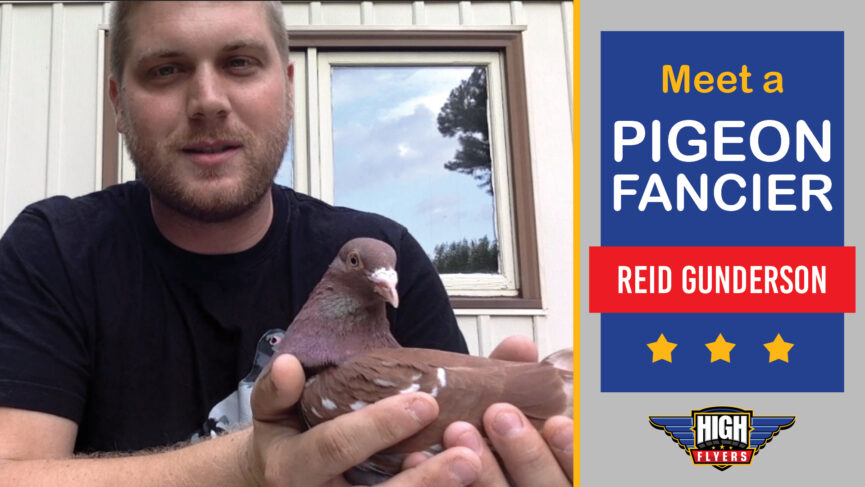 Photo of pigeon fancier Reid Gunderson holding a red racing pigeon. Text on right says: Meet a Pigeon Fancier, Reid Gunderson.